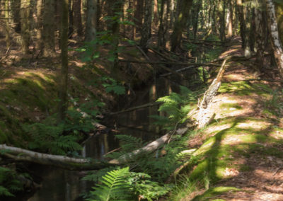 kabouterberg wandeling 027